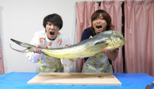 【危険】巨大肉食魚シイラをさばいて食す!!!!