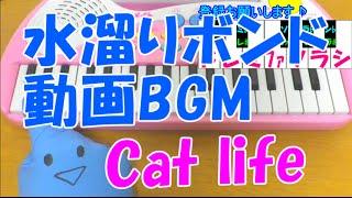1本指ピアノ【水溜りボンド 動画BGM Cat life】簡単ドレミ楽譜 初心者向け
