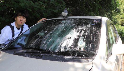 【トミー絶叫】相方の車に大量のハトのフンを落としてみたww