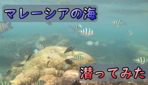 【プルフンティアン島】マレーシアの海で潜ってみたI went snorkeling in Perhentian Island