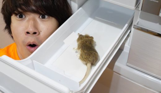 【トミー崩壊】冷蔵庫開けたらハトより大嫌いなネズミ死んでるドッキリww