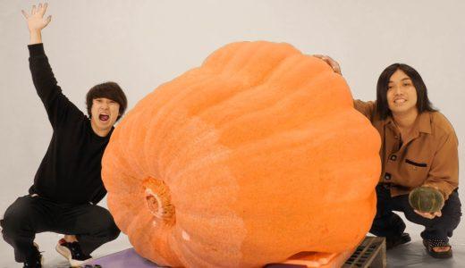 【髙地くん?】1つ50万円の世界最大のカボチャがエグすぎたwwww