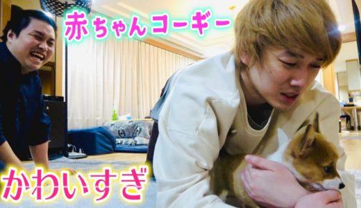 【モニタリング】カンタ、トミーの愛犬とはじめての触れ合い